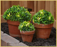 Set of 3 GREEN Solar Light Half Ball Garden Ground Plants Yard Lawn Patio Decor