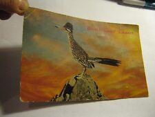 Vintage Desert Road Runner Postcard