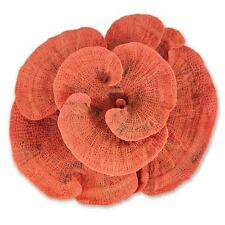 Artificial Plate Coral Fake Synthetic Marine Reef Aquarium Fish Tank Ornament