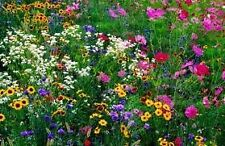 The Dirty Gardener Annual/Perennial Wildflower Seed Mix 1, 1 Ounce
