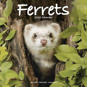 New Ferrets 2022 Wall Calendar!   FREE shipping!!