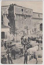 PIETRASANTA LUCCA PIAZZA ANIMATA CON BUOI 1905 BELLA !