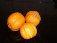 Gurke / Gurken 10 Samen Australische Zitronengurken Rarität, superlecker