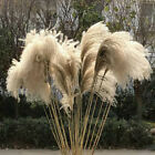 Natural Dried Flowers Pampas Grass Reed Bunch Bouquet DIY Wedding Party Decor