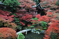 Superba giardino giapponese PAESAGGIO Canvas #304 qualità Incorniciato Wall Art Picture A1