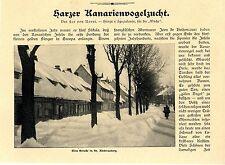 Leo von Noort Harzer Kanarienvogelzucht St. Andreasberg Ein Züchter vor s...1907