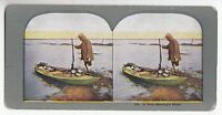 """[49175] UNDATED STEREOVIEW """"A NICE MORNING'S SHOOT"""" No. 476"""