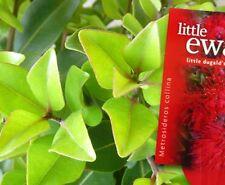 LITTLE BRIDGET Metrosideros collina native orange-red flowers plant in 140mm pot