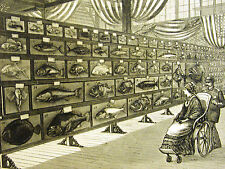 Centennial FOOD FISHES Cooking FISH Old Wheelchair 1876 Antique Art Print Matted