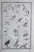 RARE LARGE 1785 ANTIQUE ENGRAVING - BIRDS - FLAMINGO, HERON, FALCON, CASSOWRAY