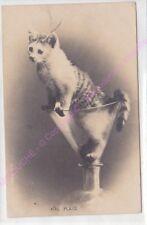 CPA FANTAISIE Chat mal placé chat entonnoir ca1902