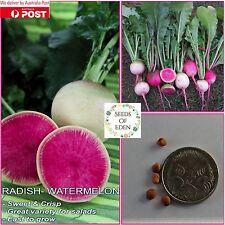 25 RADISH-WATERMELON SEEDS(Raphanus sativus); Mild & sweet flavour