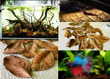 X5 Dry Leaves jack fruit leaves ketapang leaf shrimp betta fish aquarium care