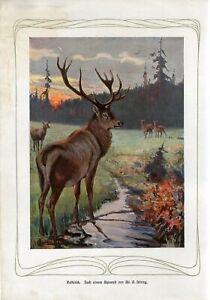 c1900 RED DEER Antique Engraving Print Paul Matschie