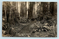 CALIFORNIA OXALIS FERN & REDWOODS BIG TREES PATTERSON RPPC #853
