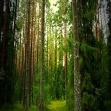 Pine Forest Fragrance Oil Candle/Soap Making Supplies *Free S&H *