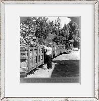 Photo: Train Hauling Grapes, Vineyard, Private Railroad, RR, Guasti, California,