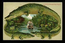 Alligator Border Postcard Ocklawaha River Boat, Palatka, Florida FL S541 Vintage