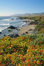 Wildflowers At Big Sur by Barbara Snyder Seascape Canvas Giclee 18x24