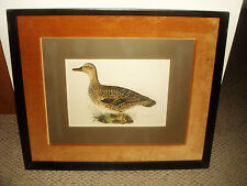 Rare Vintage 1829 PRIDEAUX JOHN SELBY PRINT Bimaculated Teal Female FRAMED