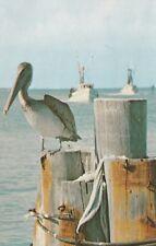"*Florida Postcard-""The Pelican Enjoying The Sun & Scenic Waterways"""