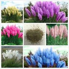 100Pcs Pampas MixColor Grass Seeds Cortaderia selloana Rare Plants DecorGarden