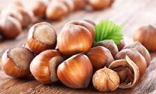 10 Hazelnut Tree Seeds Corylus Avellana ***European Guaranteed Seeds***