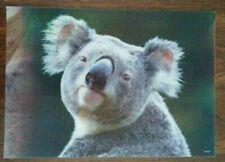 Koala bear Lenticular art print