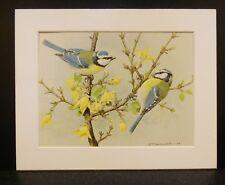 """Belle monté Large 8x10"""" imprimé oiseaux Basil Ede mésange bleue"""