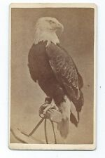 RARE 1870's CDV of CIVIL WAR EAGLE Old Abe who was with 8th Wisconsin Army