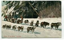 Husky Dog Sled Team Alaska 1909 postcard