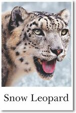 Snow Leopard - NEW Animal Wildlife POSTER