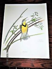 VTG 1969 RAY HARM MEADOWLARK BIRD WILDLIFE LITHOGRAPH PRINT PICTURE SIGNED