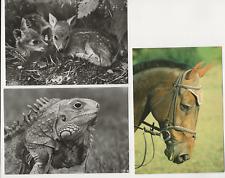 Grüner Leguan Portrait 2000 Teile Lege-Größe 90 x 67 cm Foto-Puzzle Bild von Puzzles & Geduldspiele