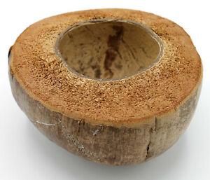 eine halbe Kokosnuss Schale getrocknet, naturbelassen