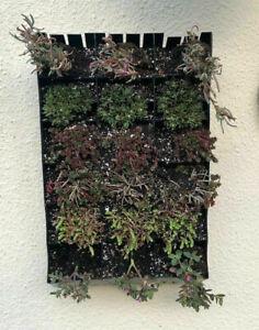Planting Bag Vertical Hanging Living Wall Gardening Planter For Flower & Herbs