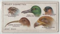 Why Different Bird Species Have Different Shaped Beaks 95+  Y/O Ad Trade Card