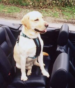 Softex® Padded Dog Car Safety & Walking Harness - By Creature Comforts