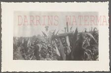Vintage Photo Case Farming Tractor in Corn Field 755758