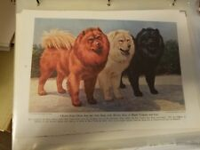 Walter A. Weber Chow Chow Trio single bookplate 1943 National Geographic Mag