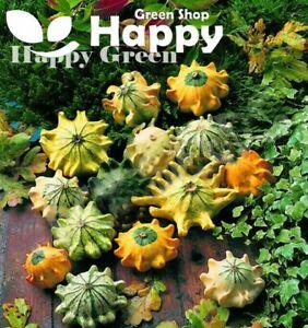 SHENOT CROWN OF THORNS - GOURD - 35 SEEDS - Cucurbita Pepo Ornamental Pumpkin