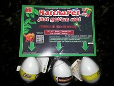 HatchaPet Eggs Growing Pet Dinosaur Eggs x3 - Grows in Water Growem Egg H20