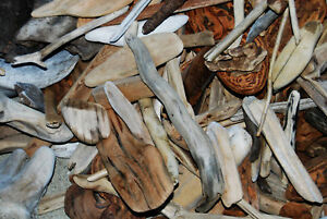 50+ Piece LOT - Sierra Driftwood & Bark -Crafts-Terrarium-Fairy Gardens-Pets-Art