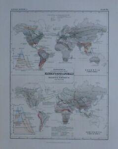 1850 HAND COLOURED MAP WORLD DISTRIBUTION MAMMIFEROUS ANIMALS RODENTIA RUMINANTI
