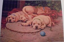 """Sacked Out -Yellow Labs by Jim Lamb, Limited Edition, 16"""" x 22 1/2"""", signed COA"""