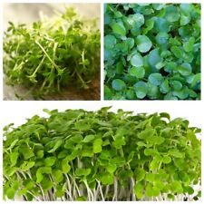 Seeds Salad Lettuce Watercress Ajur Broadleaf Wild Water Vegetable Organic