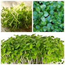 Seeds Salad Lettuce Watercress Ajur Broadleaf Wild Water Vegetable Organic