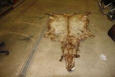 Soft Tanned Elk Hide Complete With Head Moose Deer Rug Fur Pelt Taxidermy EH1