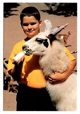 Baby Llama Postcard Catskill Game Farm New York Bottle Feeding Animal Nursery