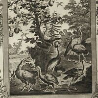 Africa birds species Fisher bird nests Aigret Swan 1778 nice old engraved print